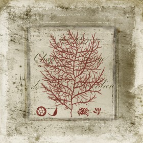 Red Coral On Text II