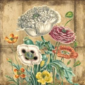 Garden & Exotic Poppies