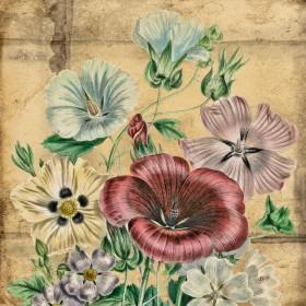 Poppy Varietals