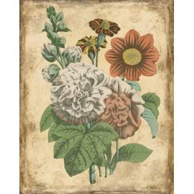 Varietes De Fleurs