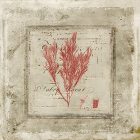 Red Coral On Text IV