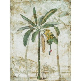 Exotic Palm I