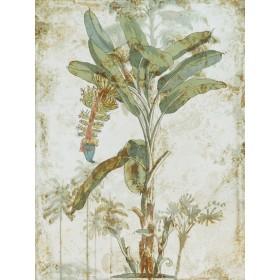 Exotic Palm III