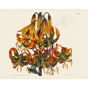 Lillies II