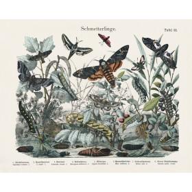 Schmetterlinge (butterflies & Moths)