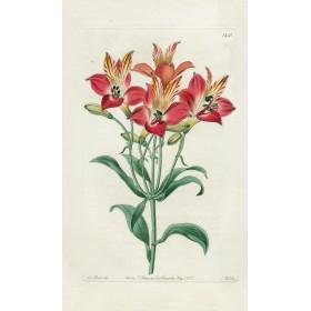 Antique Botanical