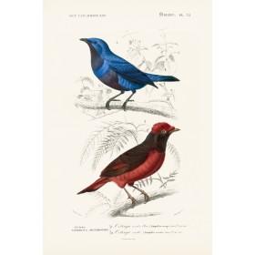 Antique Birds