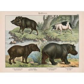 Antique Animals