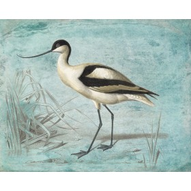 Antique Birds - Avocet
