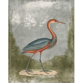 Antique Birds - Crane III