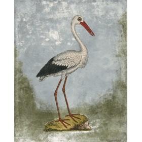 Antique Birds - Stork