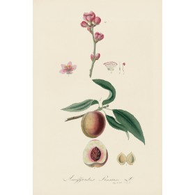 Antique Herb & Fruit