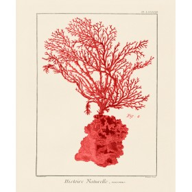 Red Coral I
