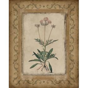 Antique Flowers II