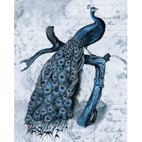 Antique Peacock I