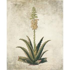Flowering Succulent I