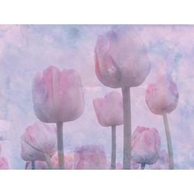 Rose Quartz And Serenity II